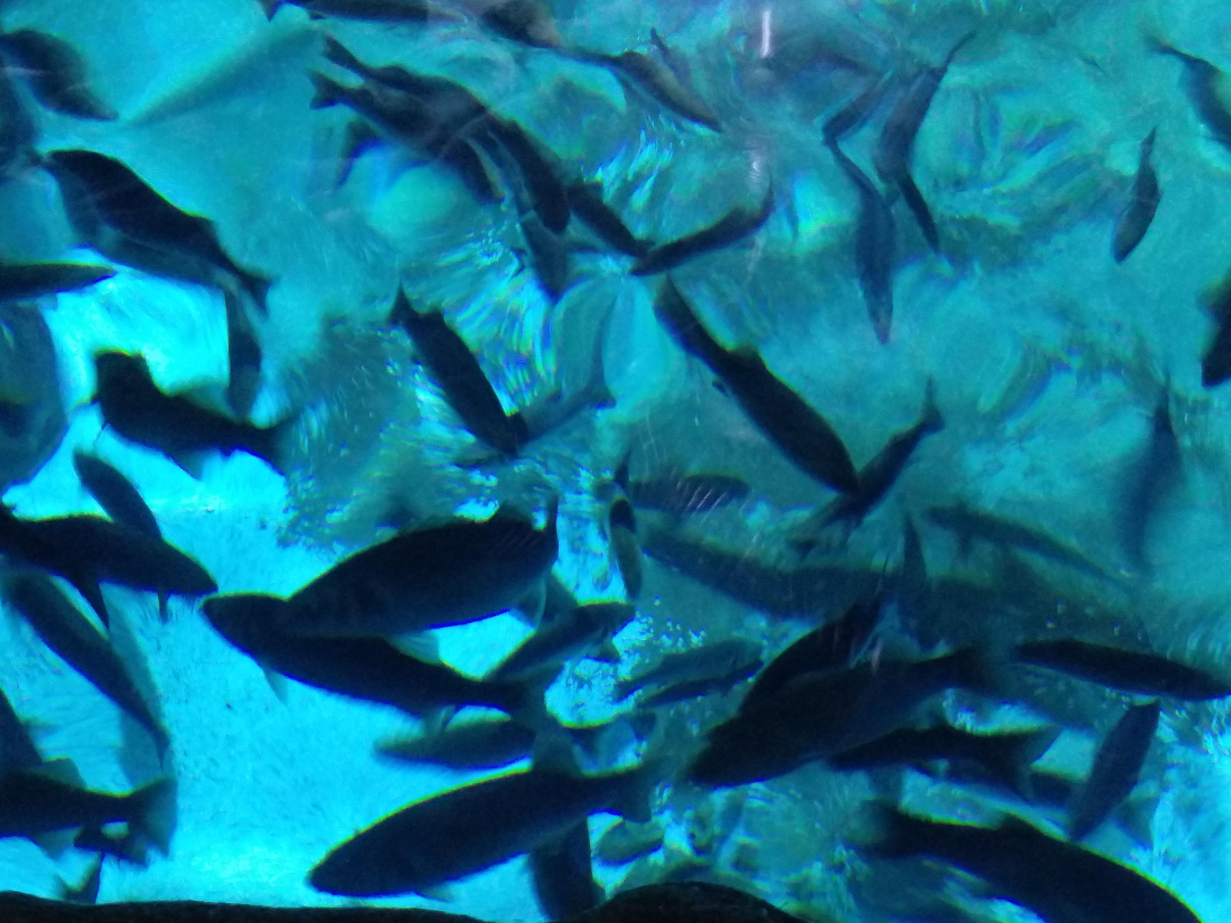 Visita, taller i submergir-se a l'aquàrium de Barcelona