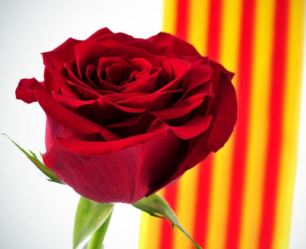 Diada de Sant Jordi per Mataró