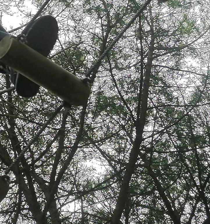 I abans de les vacances, el bosc vertical!